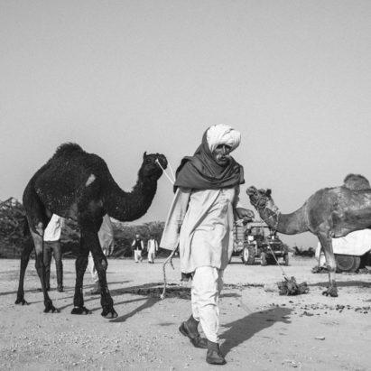 camel-festival-fair-pushkar